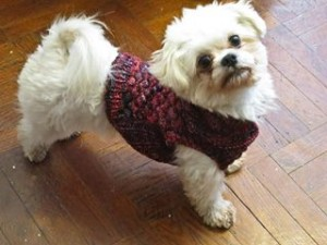 What all the cool dogs are wearing for fall!